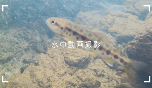 【水中動画】川で魚を撮影してみた!